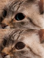 A comparison of my cat Vanilla with editing. by Pancake598
