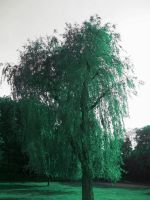 The Weeping Willow by RecycledGenius