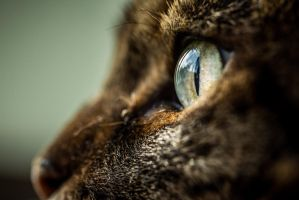 Gizmo's Eye by 904PhotoPhactory