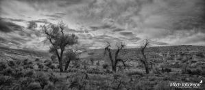 Cottonwood Trees and Red Cliffs BW  by mjohanson