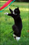 Dancing kitty by schumix