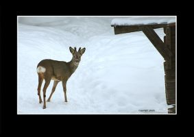 Oh my deer by nenne