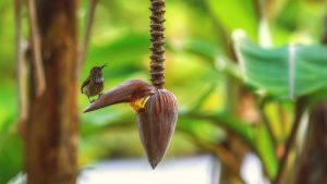 bird on a banana flower by fly10