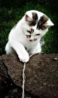 """lomo kitteh """"what's that?"""" by TuxXtreme"""