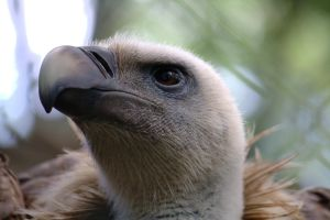 Vulture 01 by LutherHarkon