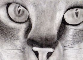 Kitty face Drawing by MikkiMarie
