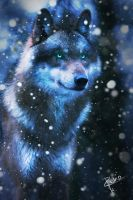 Wolf in the Winter Night by pedrohbv