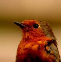 Redbreast by Tinap