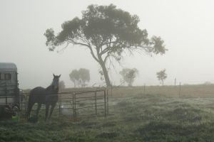 Foggy morning 1 by dottys-friend