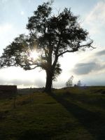 Tree Sunlight 17273483 by StockProject1