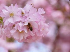 Bee II by Behind--the-lens