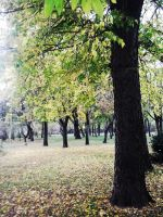 Autumn's power by DianaVVolf