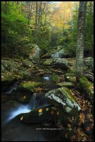 Autumn 2 2010 by TRBPhotographyLLC