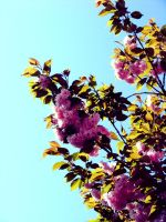 Flowered tree 3 by attilapele