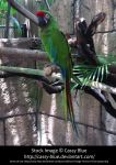 Green Macaw Stock by Cassy-Blue
