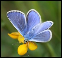 Cairngorms - Butterfly by Andy-Stewart