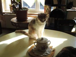 Cat on the table by Je-te-dis-tout