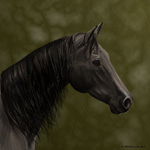 Speed Painting-Horse by Blackueen