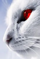 RED EYED CAT. by A-q-u-a-K-i-t-t-y