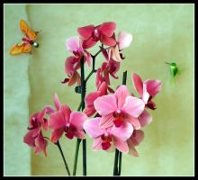 Orchid 1 by kanes