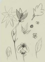 sketch flower 3 by atsumimag