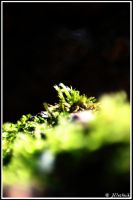 A litte bit of Moss by Hluthvik