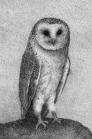 Barn Owl by Rens-Ink