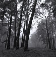 forest at dawn by montagu