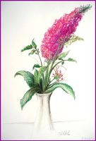 Drawing - Flower by Ennete