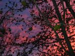 Red changes in the sky by honeysunshinetw