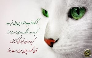 Iranian Cat. Free Iran by arasch