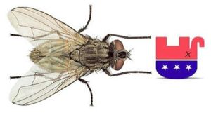 Fly Eats Dead Republican Party-Thanks John Boehner by Glady8er2