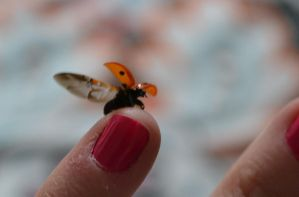Ladybird about to fly 2 by Bexiieeee