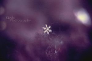 First snowflake by eulalievarenne
