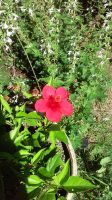red flower by dottypurrs
