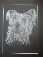 skye terrier cross -snowy 1 by shirls-art