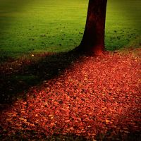 Red-Green Carpet by kereszteslp