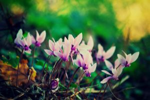 Autumn Crocus by LuizaLazar
