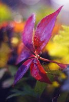 Colors of Fall by Justine1985