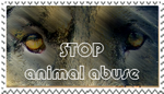 stop animal abuse by meramaya89