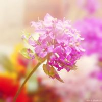 lavender feeling by JustMe255
