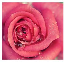 Rose Heart by Nataly1st