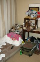 """my """"nest"""" at FC by LilleahWest"""