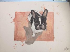 Freud the Bulldog by deborafischer