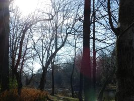 Filltered Light in Woods through Trees 1 by EveyD