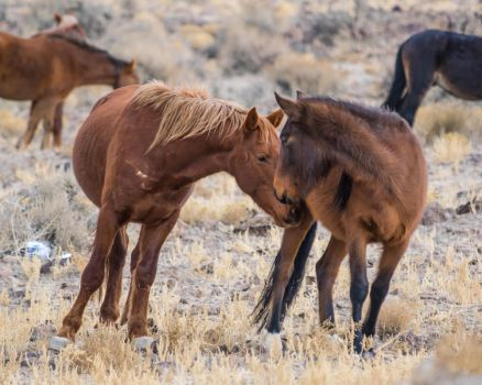 Wild Horses140111-52 by MartinGollery