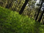 Forest stock by Lucy-Eth-Stock