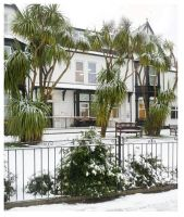Palm Tres In The Snow by Meeoko