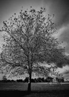 tree in the park by awjay