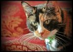 Calico Cuddles by TeaPhotography